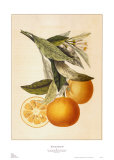 Tuscany Citrus II Posters