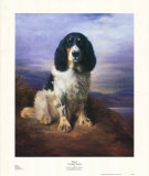 Königsblau Poster von Lilian Cheviot
