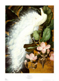 White Peacocks Poster by Jessie Arms Botke