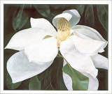 Magnolia Study Print by Ginny Chenet