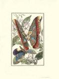 Papillon II Poster par William Henry Pearson