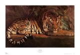 Königlicher Tiger Kunst von Paul Jouve