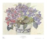 Lace Cap Hydrangeas Print by Barbara Van Winkelen