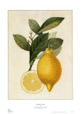 Tuscany Citrus I Posters