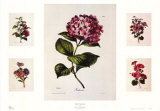 Floral Centerpiece Posters by Alfred Lemercier