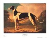 Englischer Windhund Kunstdrucke von Benjamin Killingbeck