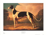 English Greyhound Poster by Benjamin Killingbeck