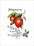 Persimmon Prints by G. Phillips