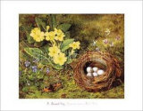 Primroses with a Bird's Nest Art by H. Barnard Grey
