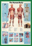 Human Body Print