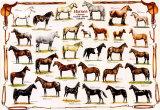 Hästar Affischer