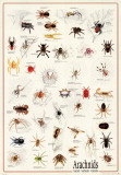 Arachnids Poster