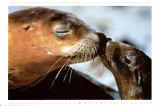 Seehunde Kunstdruck