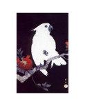 Pappagallo Ukiyo-e Poster di Ohara Shoson