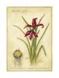 Jacobean Lily Prints by Meg Page