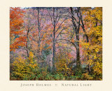 Trees in a Field Poster by Joseph Holmes