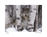 Mountain Ranger Prints by Art Wolfe