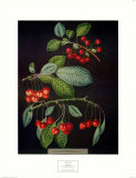 Cherries I Posters by George Brookshaw