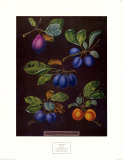 Plums I Poster by George Brookshaw