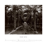 Palm Grove, 1966 Prints by Ansel Adams