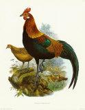 Rooster II Kunstdrucke von James Elliot