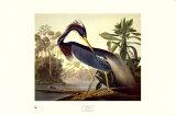 Dreifarbenreiher Kunst von John James Audubon