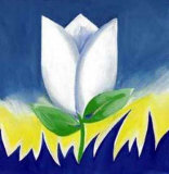 White Tulip Supreme Prints by Alfred Gockel