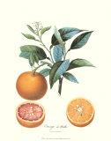 Orange Poster von Pierre-Antoine Poiteau