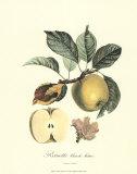 Apple Poster von Pierre-Antoine Poiteau