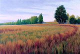 Sauvie Island I Prints by Alan Stephenson