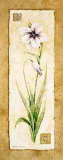 Gladiola Prints by Pamela Gladding
