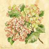 Hydrangea Art by Pamela Gladding