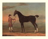 Racehorse Victorius Print by R. Roper