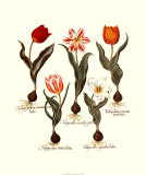 Tulips I, Art Print