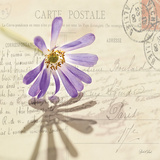 Vintage Letter and Purple Daisy 高品質プリント : デボラ・シェンク