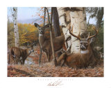 Autumn&#39;s Majesty Prints by Kevin Daniel