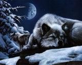 Loup endormi et loup sentinelle Affiches par Kevin Daniel