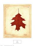 Oak Leaf Posters af Meg Page