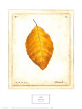 Beech Leaf Posters by Meg Page