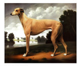Greyhound in a Parkland Landscape Posters by Christine Merrill