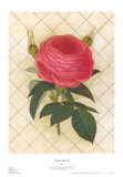 Trellis Rose II Posters by Susan Davies