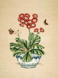 Auricula Whimsy Posters by P. Bowden