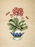 Auricula Serendipity Posters by P. Bowden