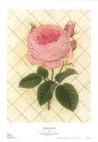 Rose vor Gitter III Poster von Susan Davies