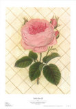 Trellis Rose III Poster by Susan Davies