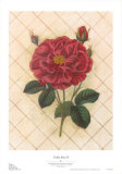 Trellis Rose IV Posters by Susan Davies