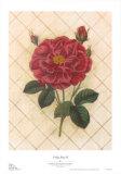 Trellis Rose IV Posters by Susan Davies