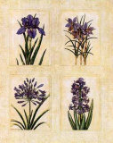 Antique Lavender I Posters by Richard Henson