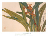 Brown Orchids Prints by Kosikose