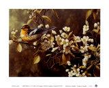 Fichtenwaldsänger Poster von Pierre Leduc